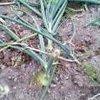 20060603_tamenegi2_1