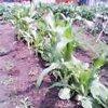 20060624_toumorokosi