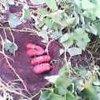 20060916_satumimo