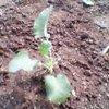 20060924_buroltuikori