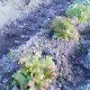 20061021_saniretasu